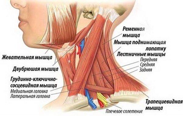 hipertenzijos kaklo gimnastika